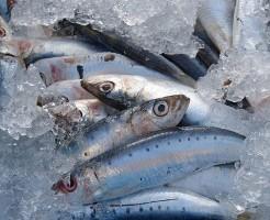 setsubun-sardines_01