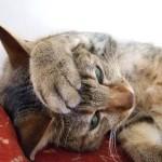 【猫のiphoneケース】iPhone6の可愛いネコケース20選!