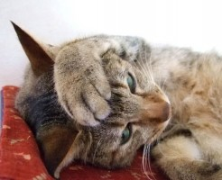 cat-iphone6-case_01