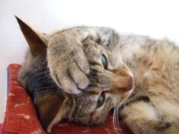 猫のiphoneケース(iphone6向け)