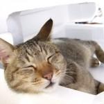 猫好き彼氏にプレゼントしたいおすすめのネコグッズ【7選】