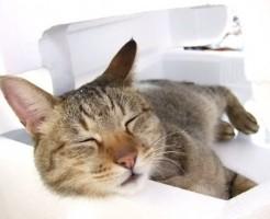cat-lover-boyfriend-present_01