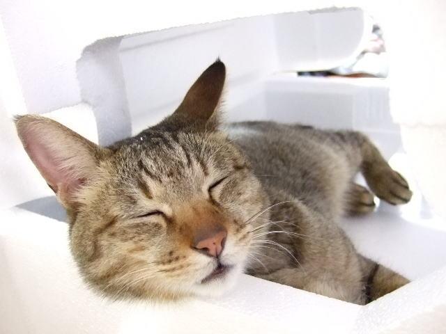 猫好き彼氏に贈るプレゼント